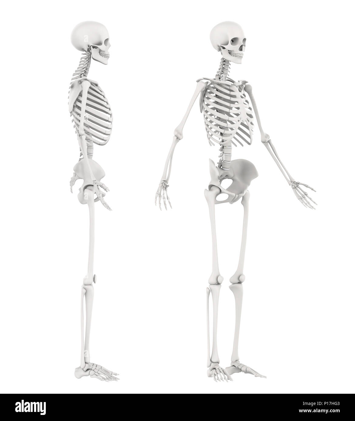 Human Spine Bone Man Side View Stock Photos & Human Spine Bone Man ...