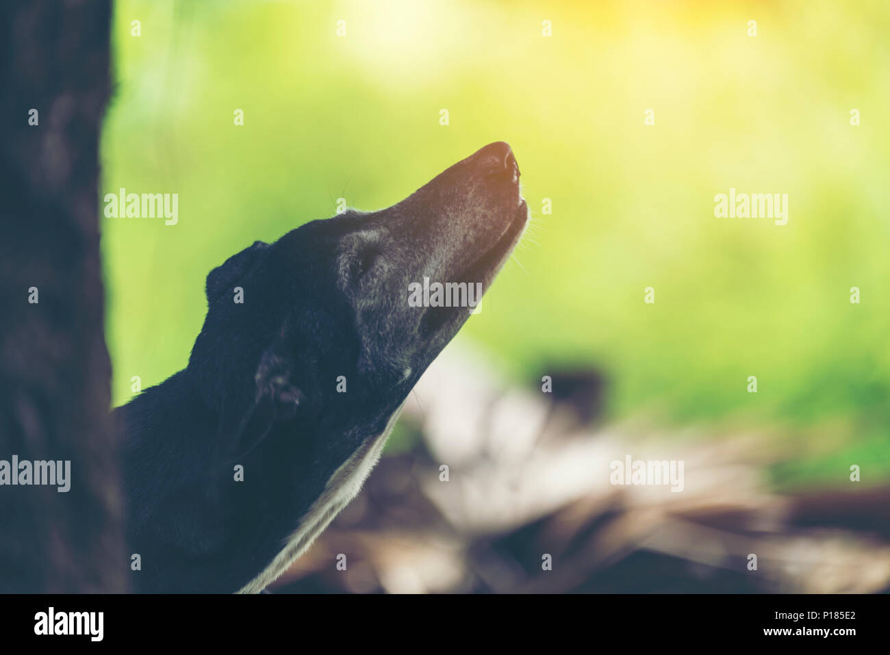 black dog In the shady garden is natural. - Stock Image