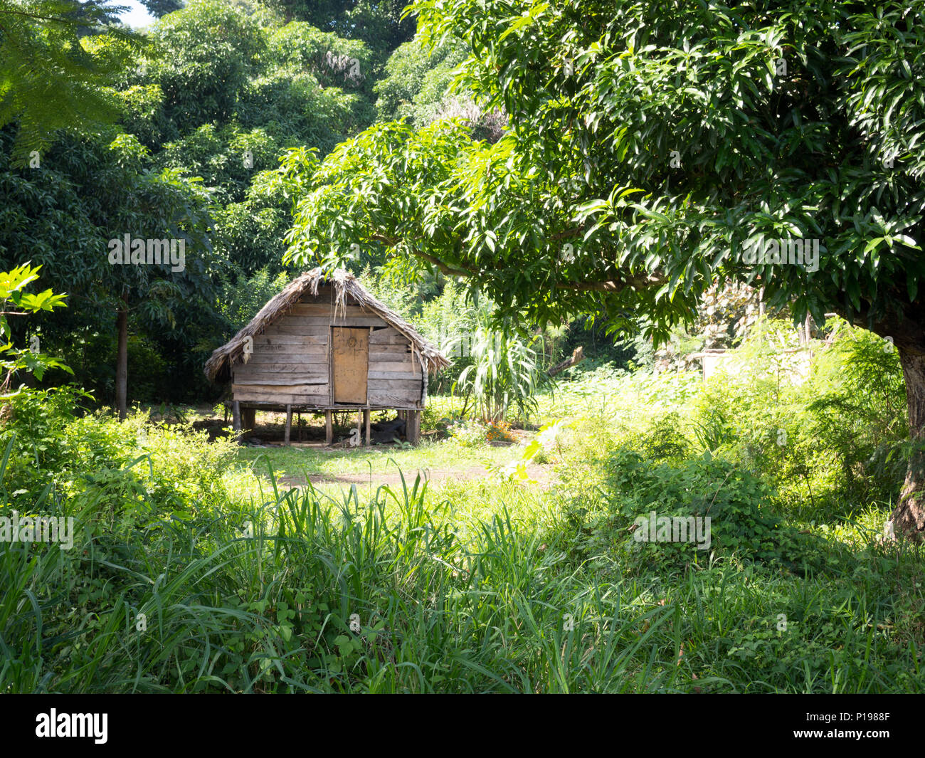 Wood Hut Home Local Village On Tanna Island, Vanuatu - Stock Image