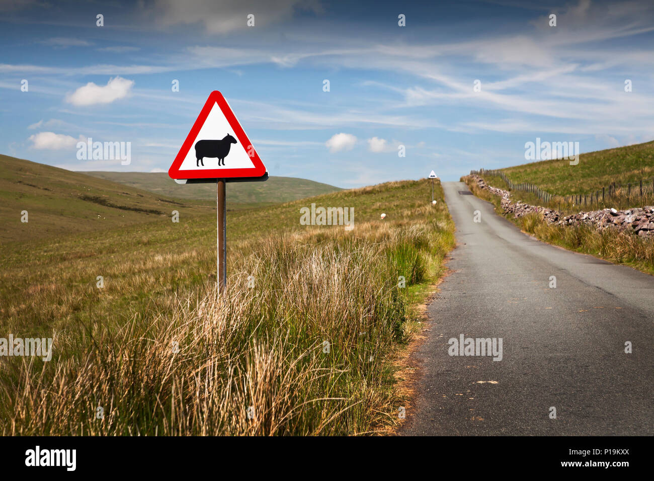 Mountain road sheep warning sign in the Brecon Beacons National Park; Wales; UK - Stock Image