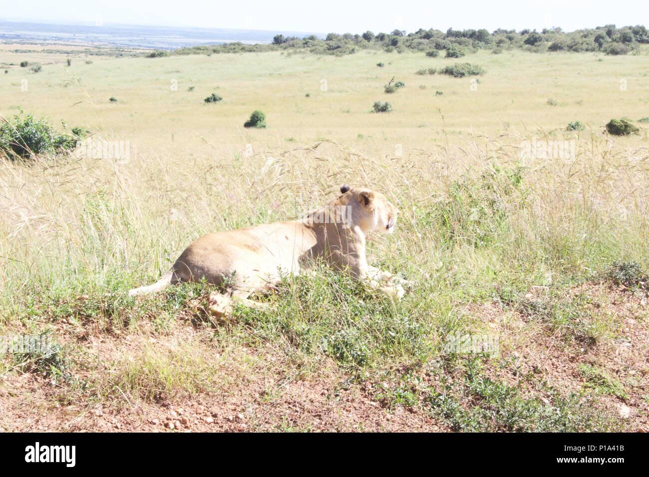 Views from Masai Mara kenya - Stock Image