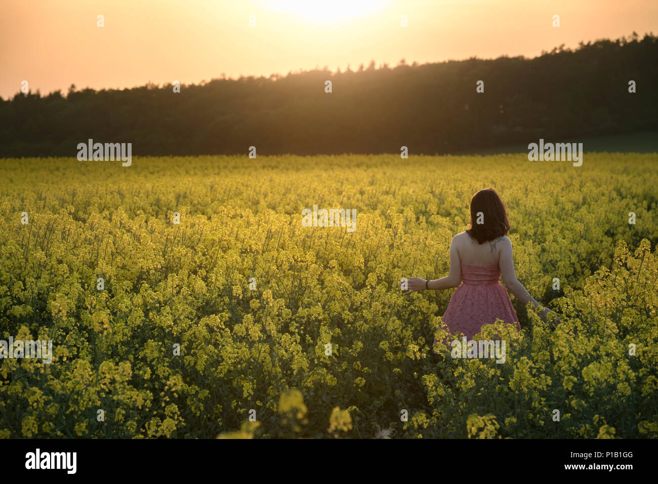 Surrounded By Canoloa Feilds Quotes: Canola Fields South Stock Photos & Canola Fields South