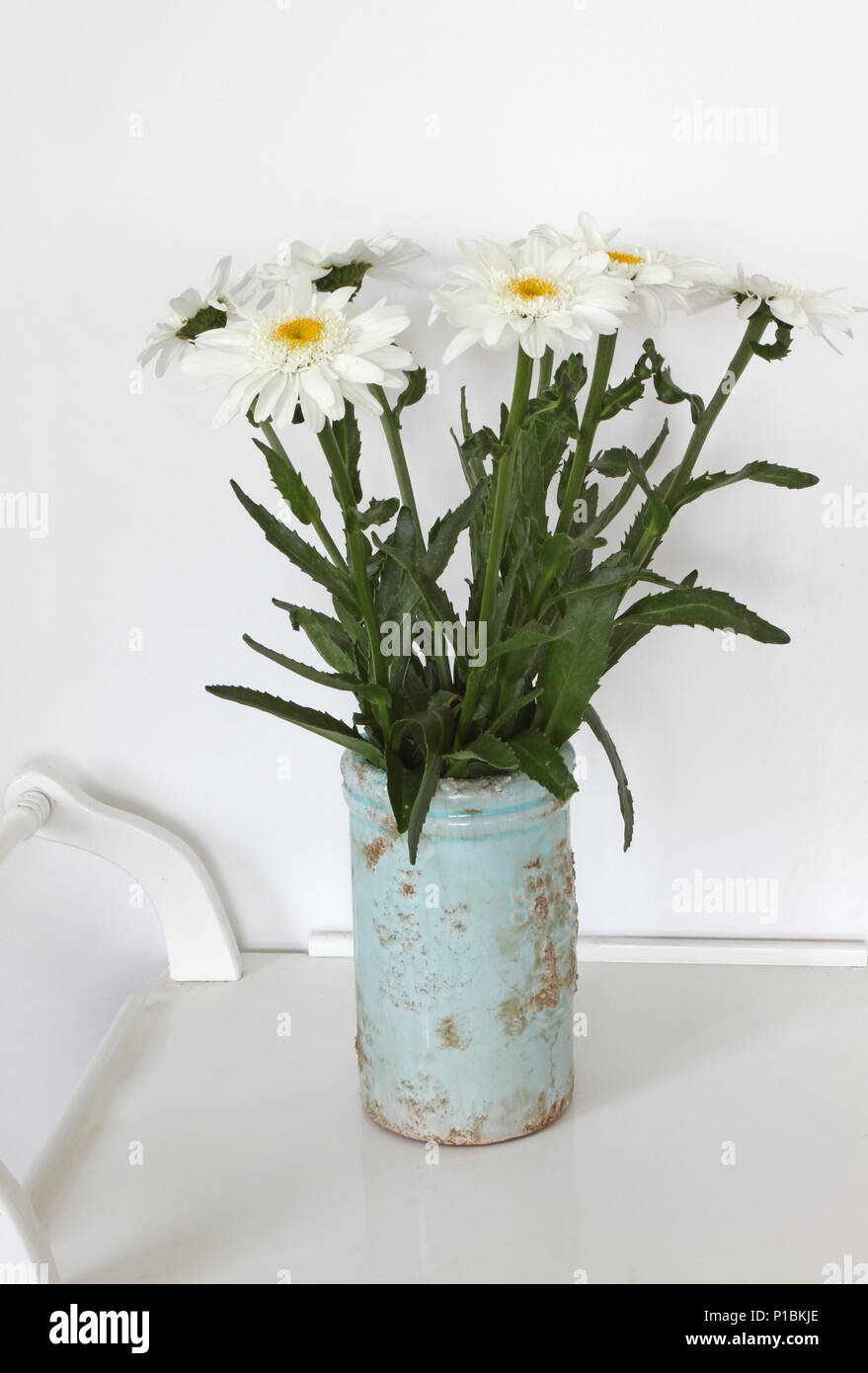 Still Life With Vase With Chamomile Flowers Daisy Flowers Bouquet
