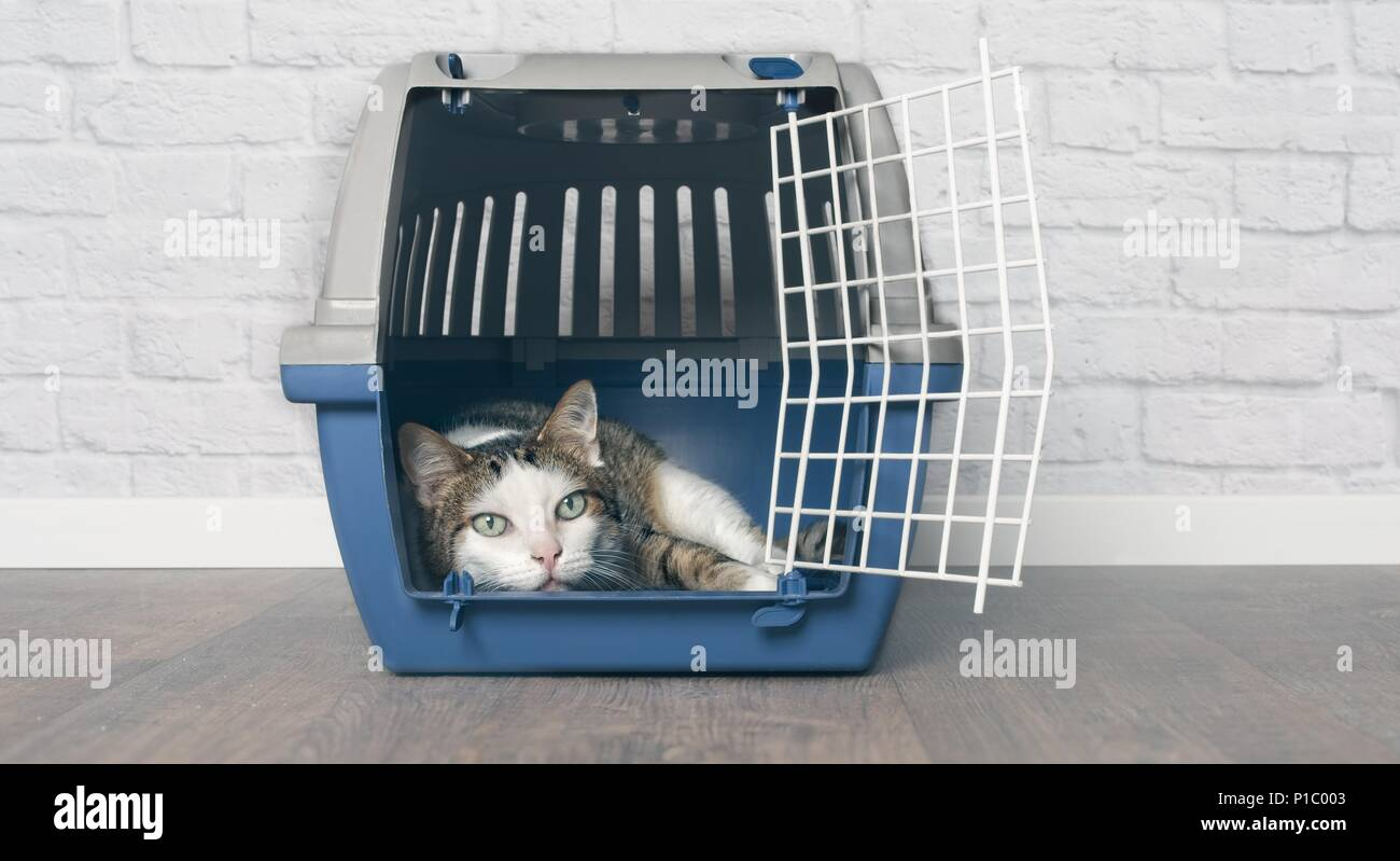 Old tabby cat lies in a travel crate. - Stock Image