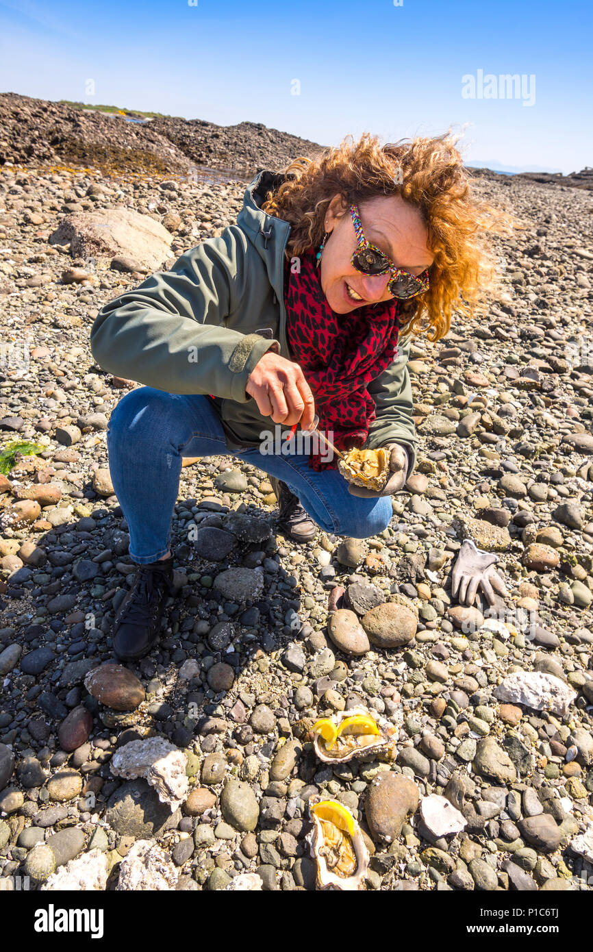 Woman opening large fresh wild oyster, Hornby Island, BC, Canada. - Stock Image
