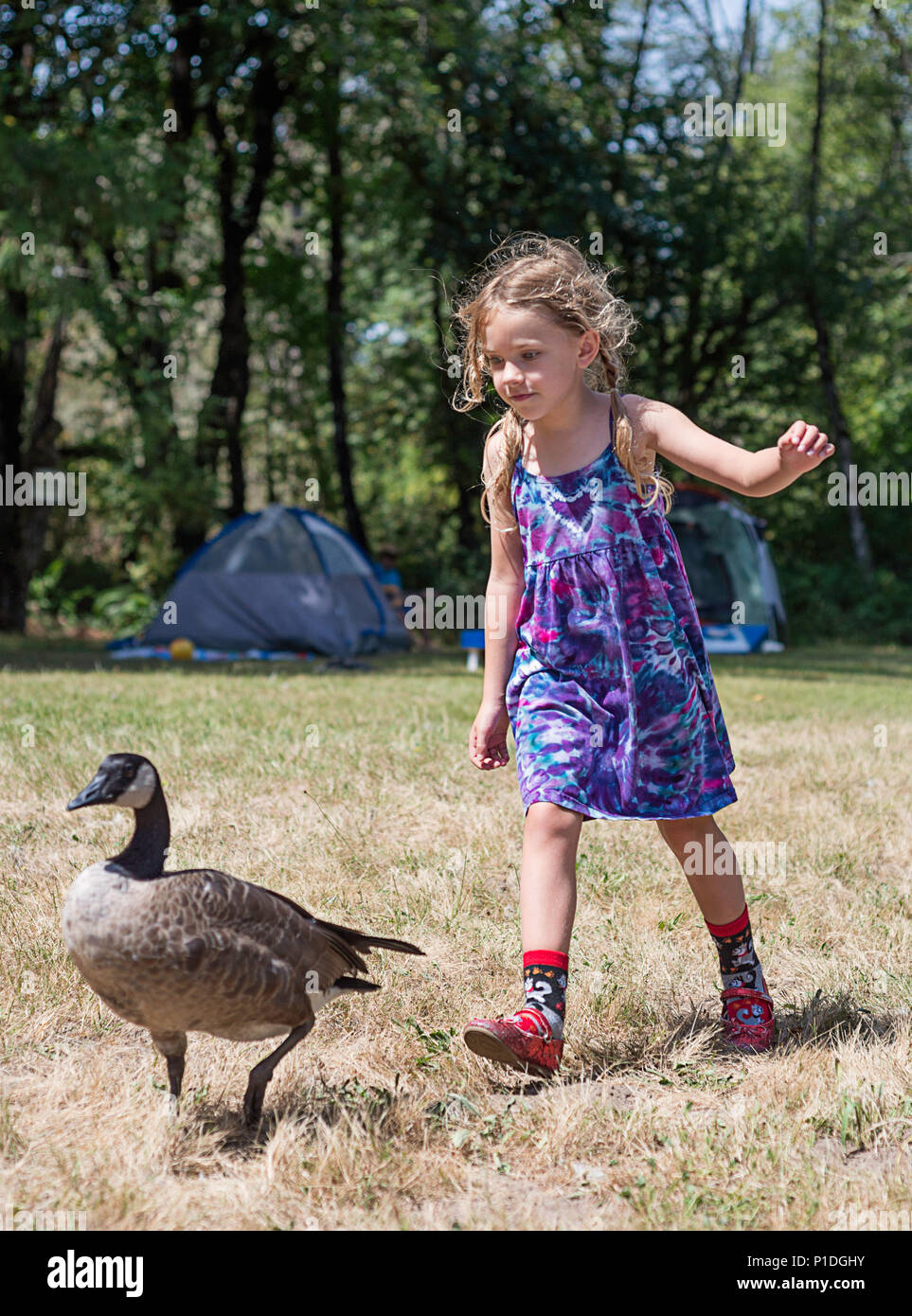 A young girl chasing off a wild goose. - Stock Image