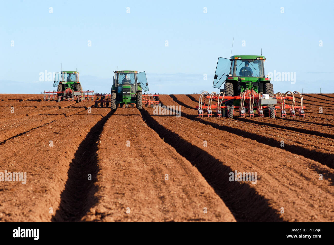 Planting carrot seed, Rocky Lamatinna and Sons property, Wemen, Victoria, Australia. - Stock Image