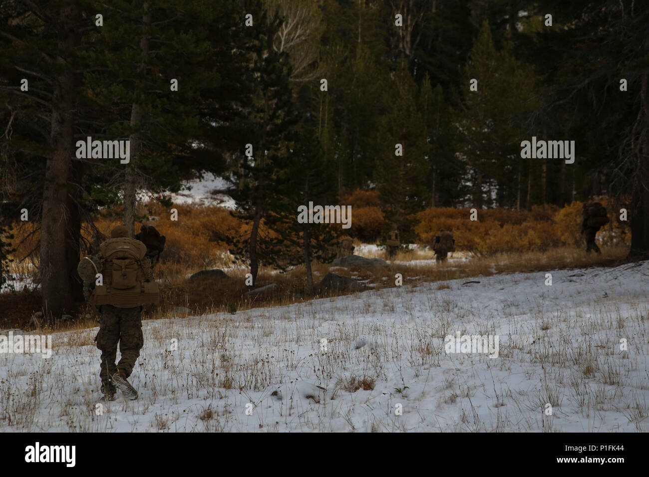 Marines with Company L, 3rd Battalion, 4th Marine Regiment, patrol through snow cover grounds during Mountain Warfare Training at Marine Corps Mountain Warfare Training Center, Bridgeport, Calif., Oct. 22, 2016. Throughout the battalion's culminating training event, Marines had to contend with the unpredictable weather of the Sierra-Nevada Mountain Range. Stock Photo