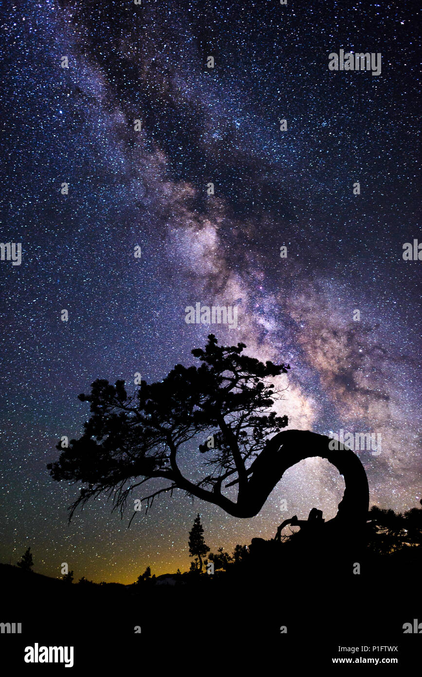 The Milky Way Galaxy over a lone juniper tree in Desolation wilderness hike at Lake Aloha near south lake tahoe, California. - Stock Image