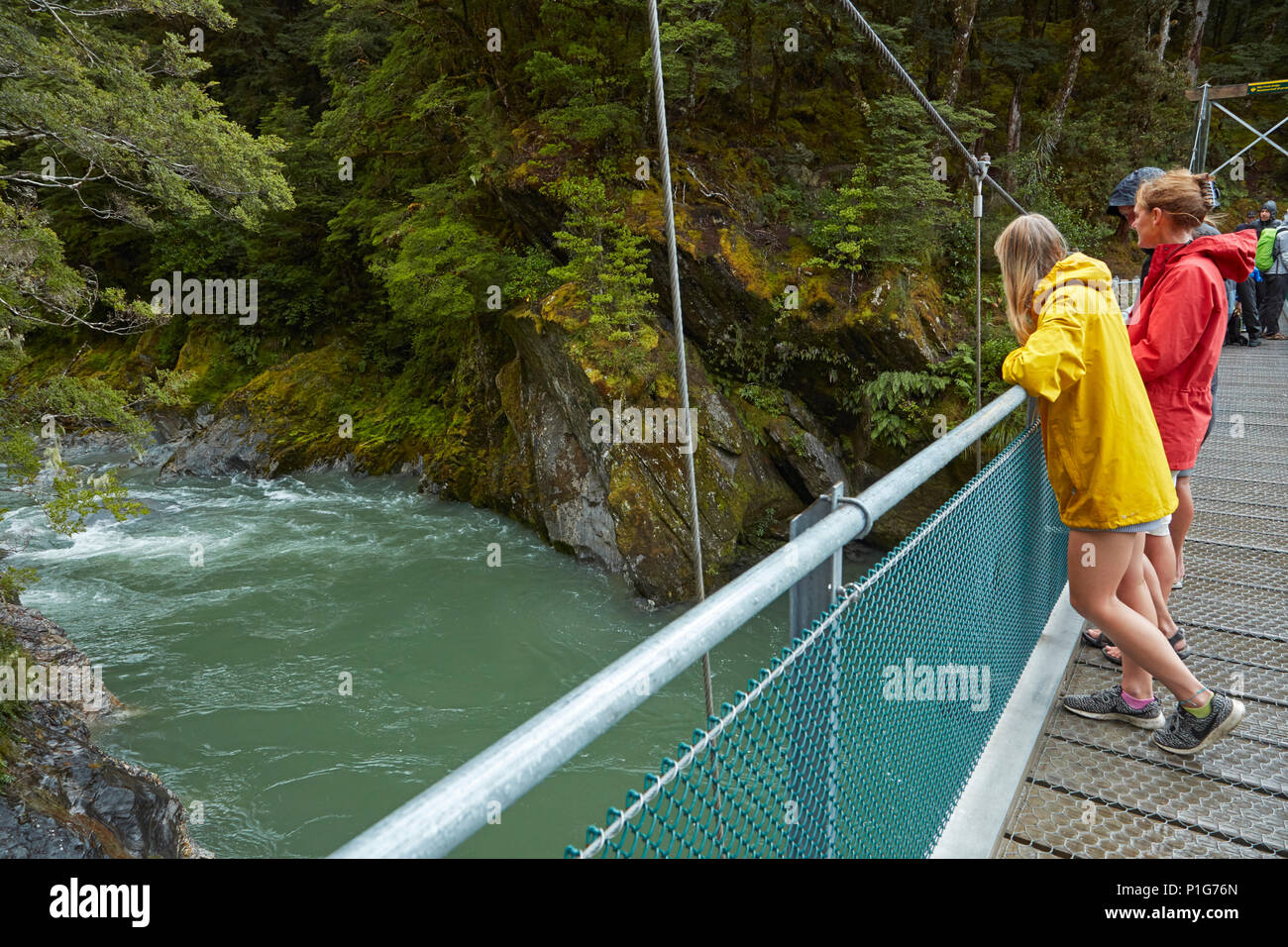 Tourists on footbridge over Blue River, Blue Pools, Mount Aspiring National Park, Haast Pass, near Makarora, Otago, South Island, New Zealand - Stock Image