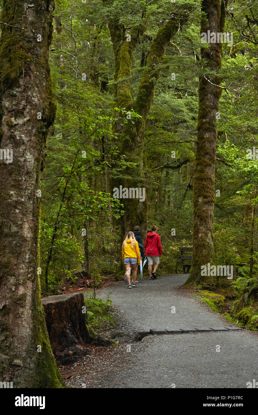 Track to Blue Pools, Mount Aspiring National Park, Haast Pass, near Makarora, Otago, South Island, New Zealand (model released) - Stock Image