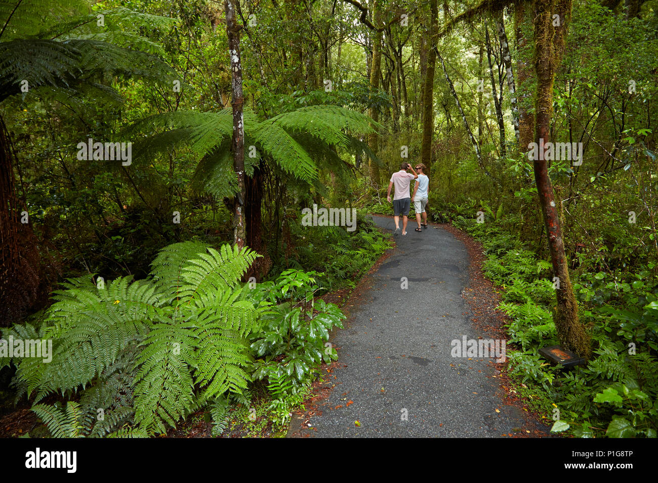 Tourists on bush walk, Pleasant Flat, Haast Pass, Mt Aspiring National Park, West Coast, South Island, New Zealand (model released) - Stock Image