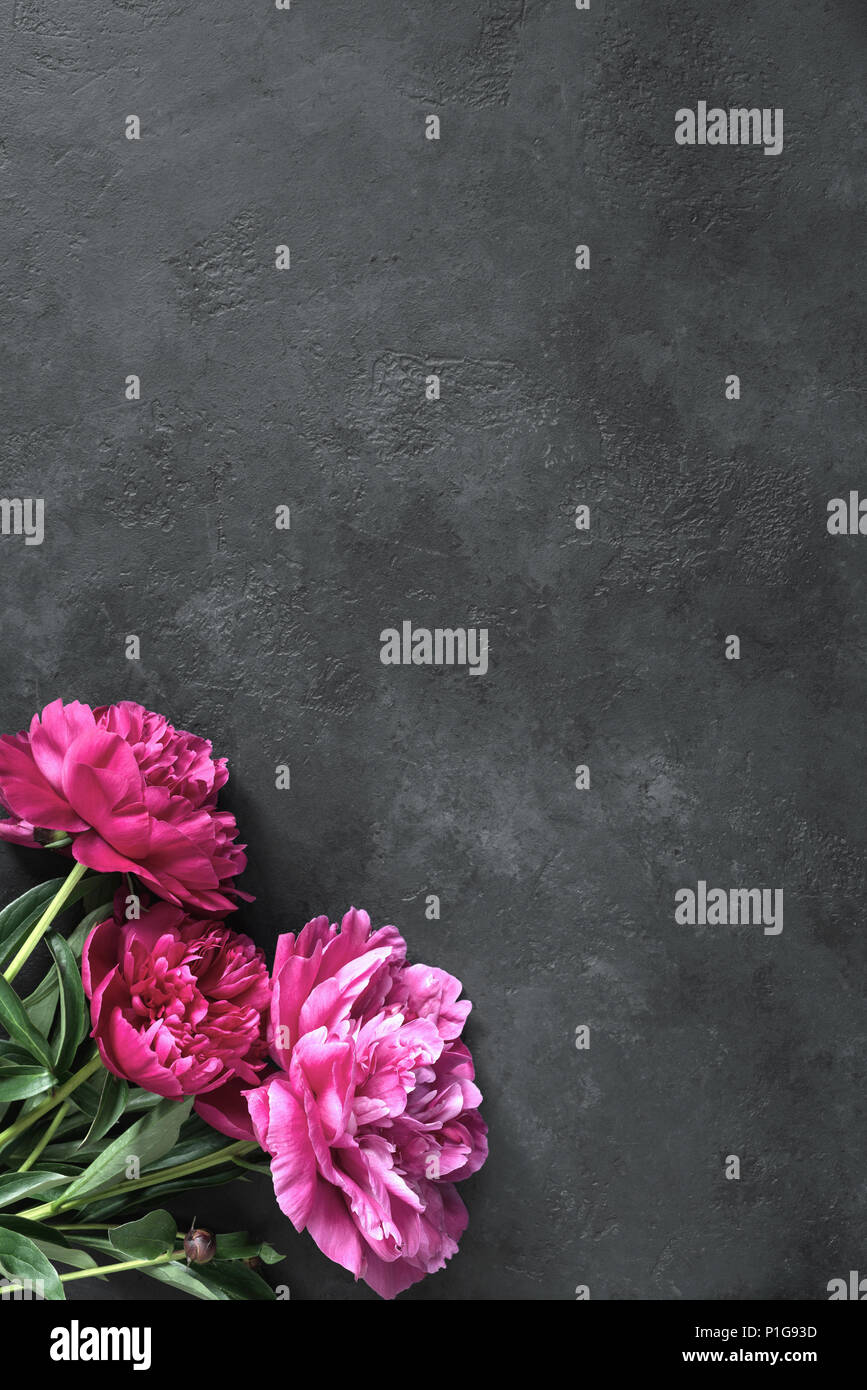 Beautiful magenta peonies on dark stone background. Floral frame or floral background with copy space for text. Gift, holidays, present or floral card - Stock Image