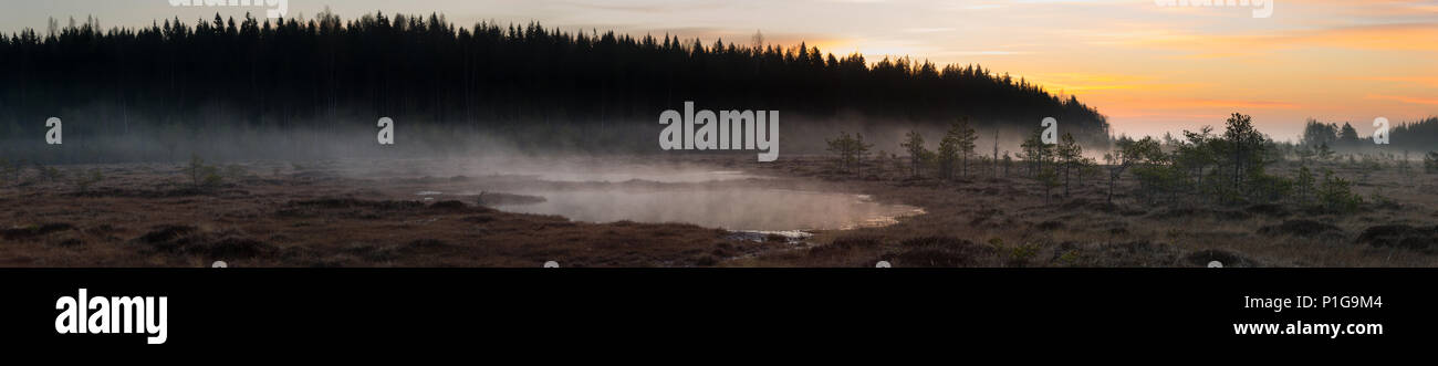 Misty before the sunrise. Torronsuo national park, Tammela, Finland. - Stock Image