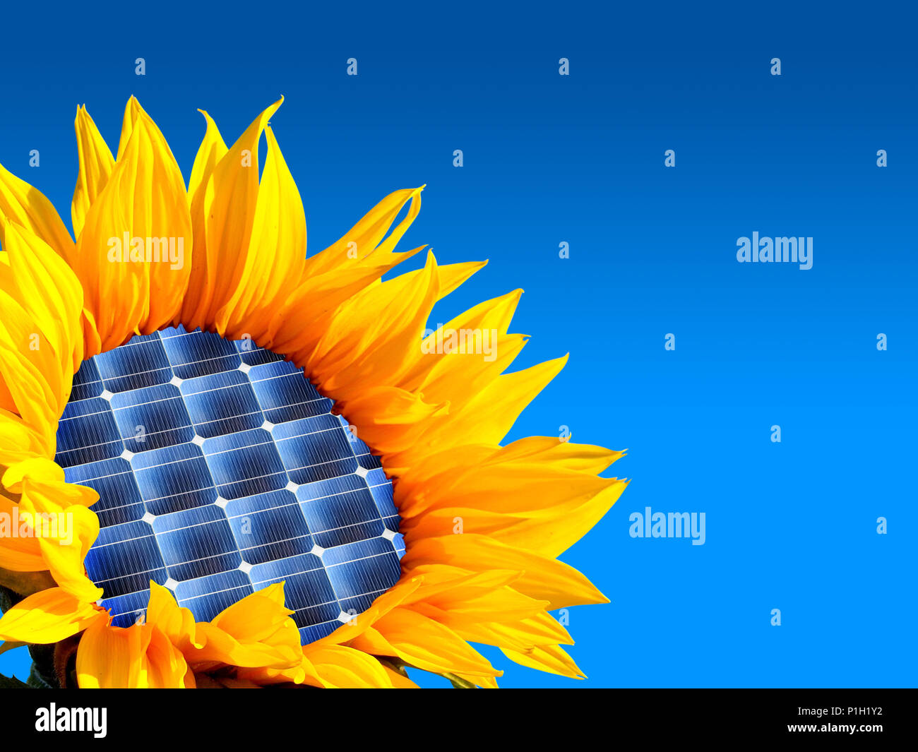 sunflower with solar energy, integration of environment and technology - Stock Image