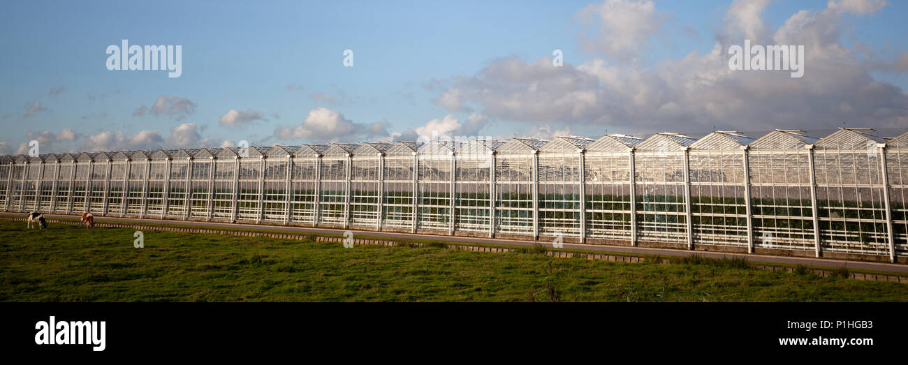 Facade of a large glass greenhouse or nursery hothouse panorama view - Stock Image