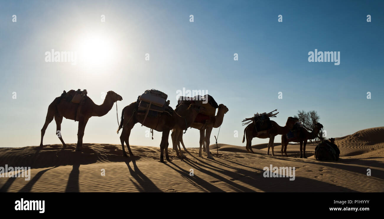 Silhouette of a caravan of camels in sand dunes - South Tunisia - Stock Image