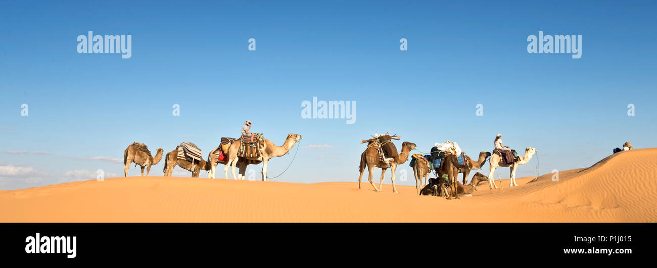 Caravan of camels in the Sand dunes desert of Sahara, South Tunisia - Stock Image