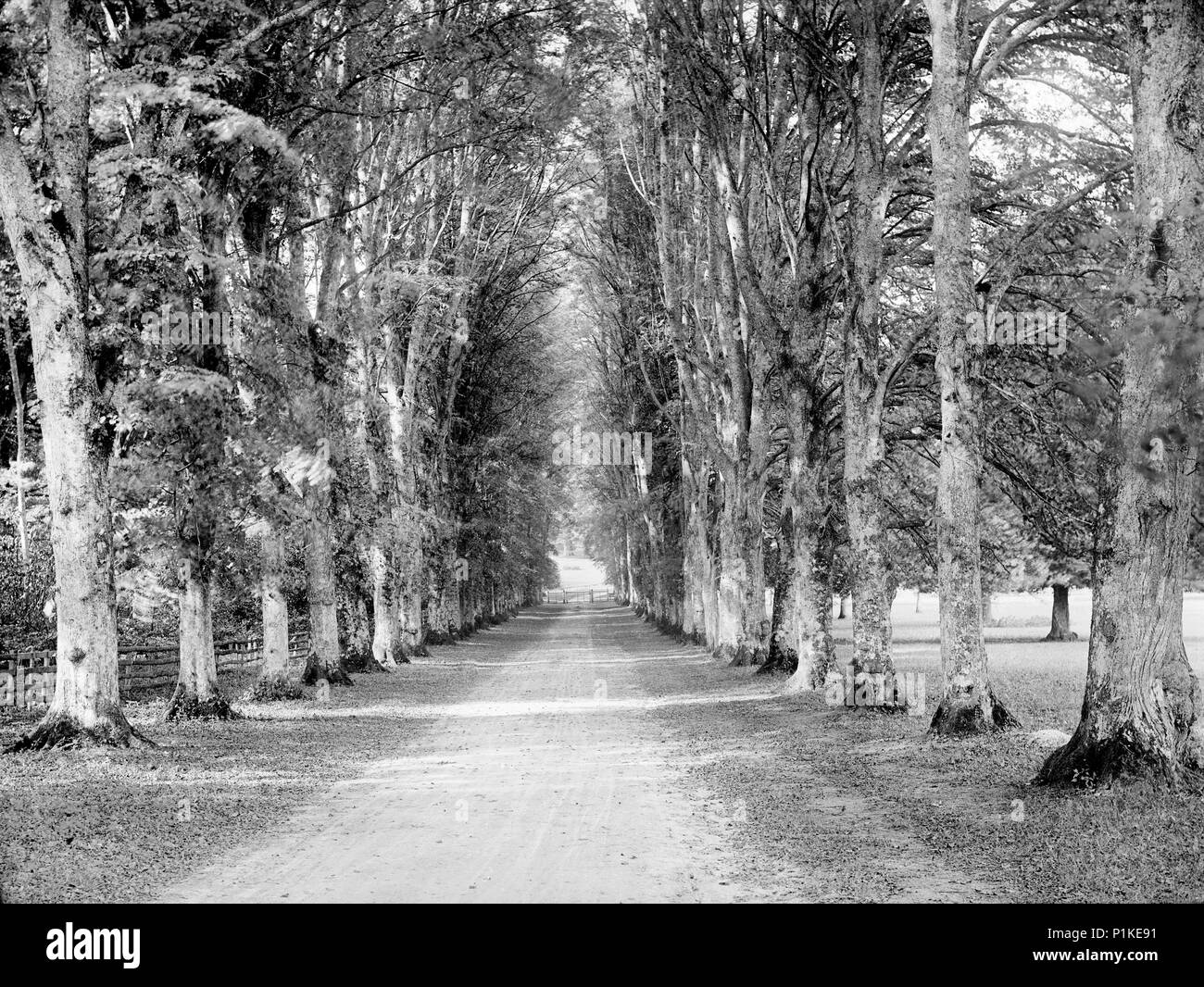Dames Avenue, Highclere Castle, Hampshire, c1860-c1922. View looking down the avenue towards a gate in the park. - Stock Image