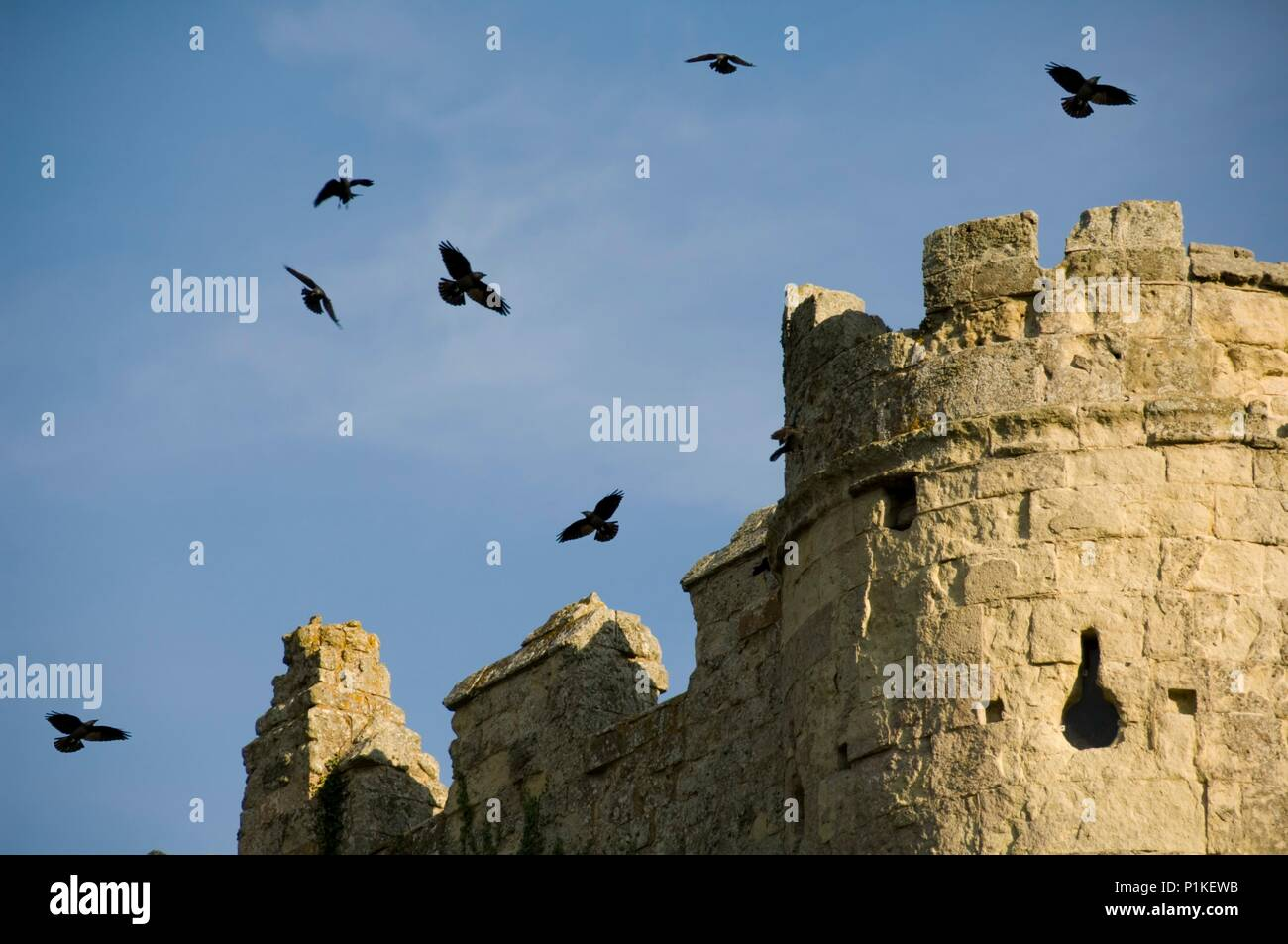 Carisbrooke Castle, Isle of Wight, c1980-c2017. View showing crows circling above the gatehouse. King Charles I was imprisoned in the castle for fourt - Stock Image