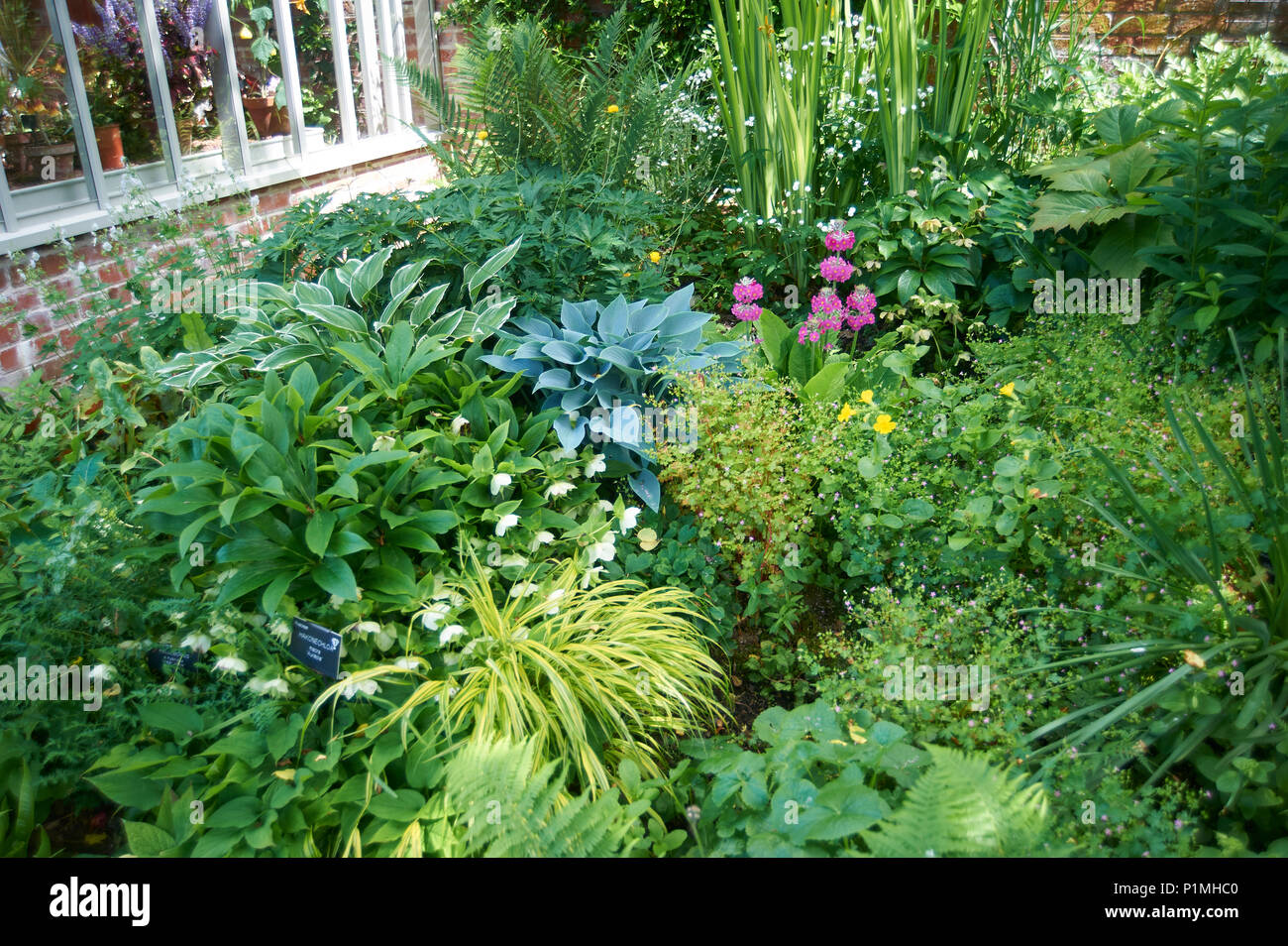 Ferns Hostas And An Assortment Of Shade Loving Plants Growing On