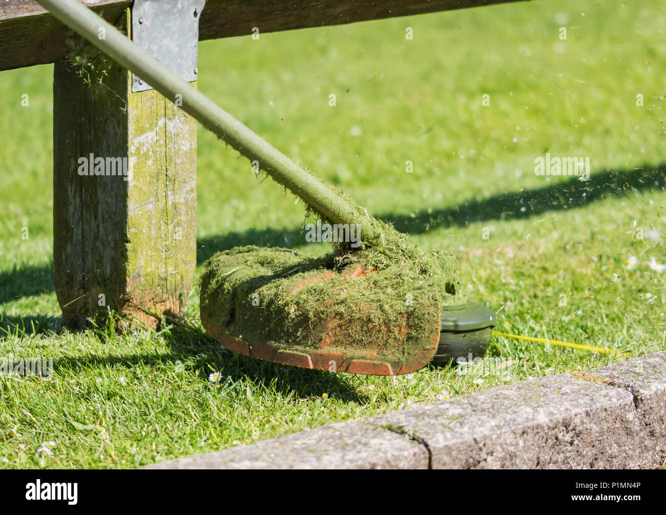 Closeup of a grass strimmer / grass trimmer in late Spring in a park. - Stock Image