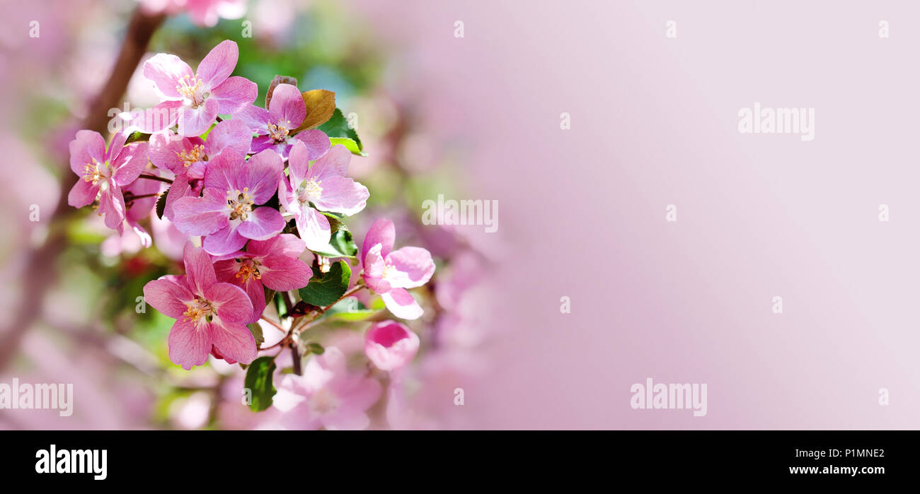Fruit and flowers hawaiian stock photos fruit and flowers hawaiian hawaiian style floral background blossoming pink petals flowers close up fruit tree branch izmirmasajfo