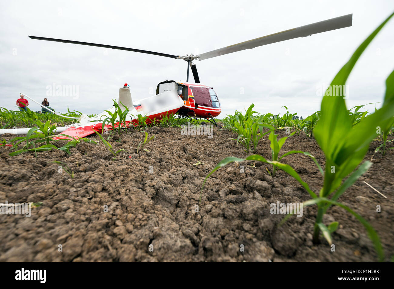 Berne, Germany. 12th Jun, 2018. 12 June 2018, Germany, Berne: An Enstrom F-28F helicopter after an emergency landing in a field of maize near Berne due to engine failure. Both people on board remained uninjured. Photo: Mohssen Assanimoghaddam/dpa Credit: dpa picture alliance/Alamy Live News - Stock Image