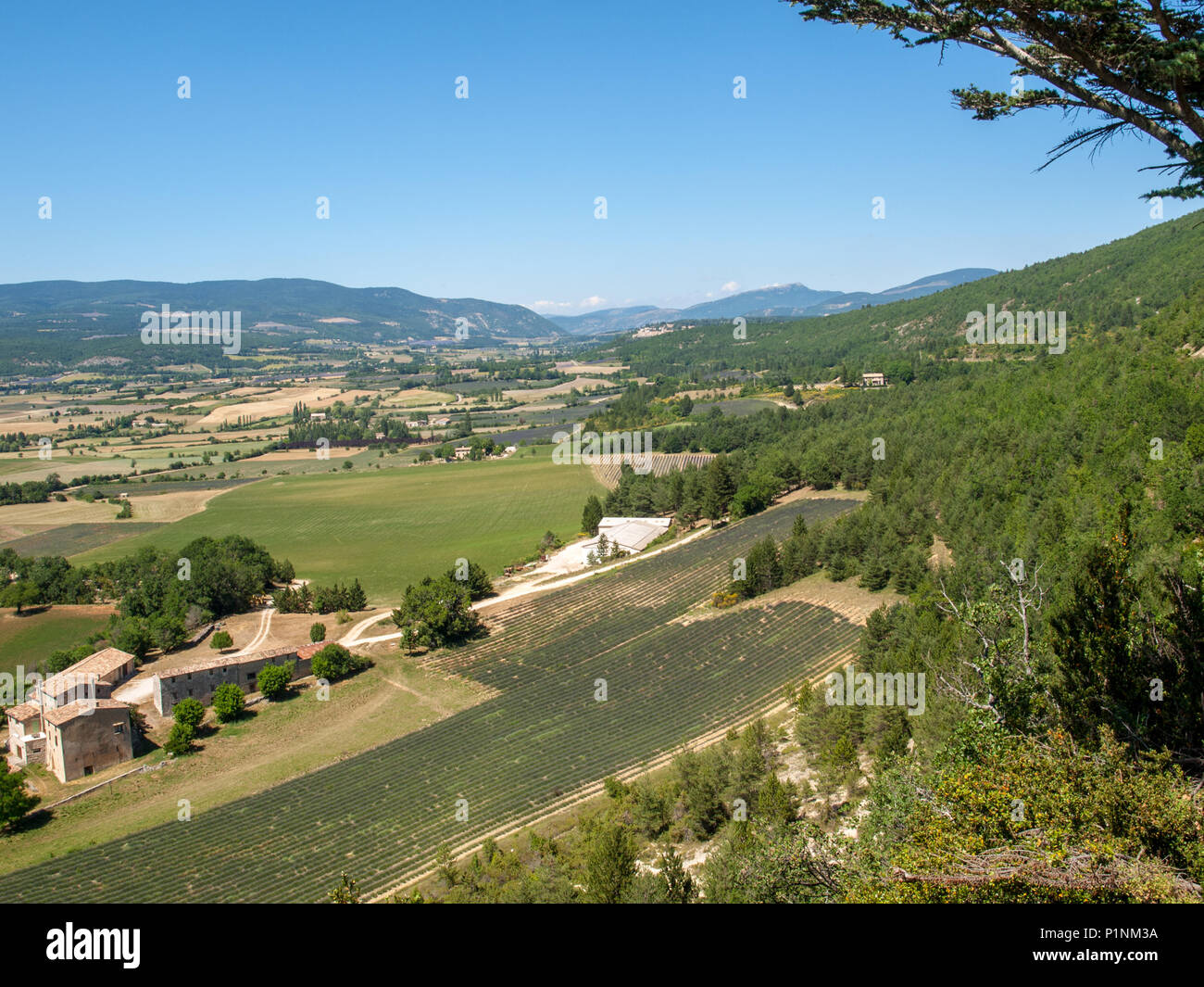Fields and meadows in valley below Sault, Provence France - Stock Image