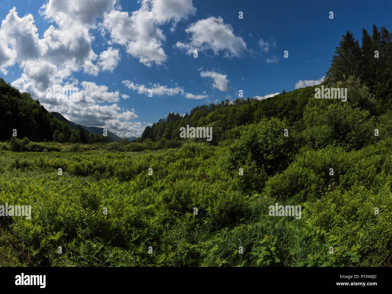 Lush landscape with blue sky and fluffy clouds. - Stock Image