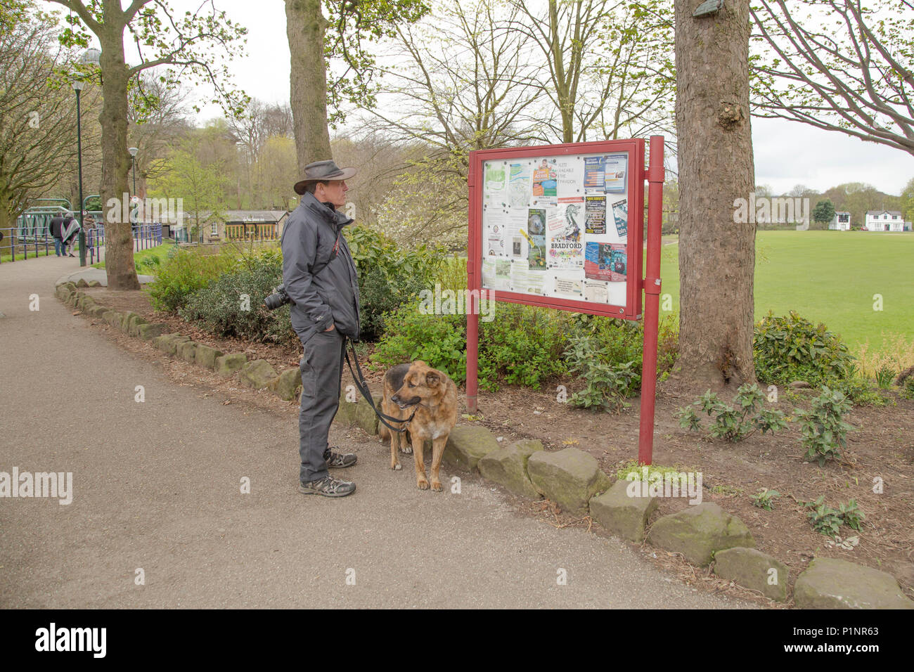 A male dog walker is looking at a tourist noticeboard in Roberts Park, Saltaire. - Stock Image