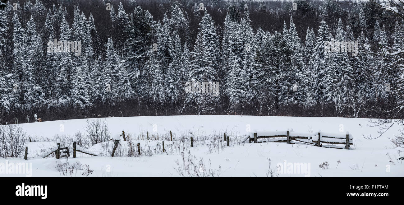 Field and fence in the snow with snow-covered trees in the background; Foster, Quebec, Canada - Stock Image