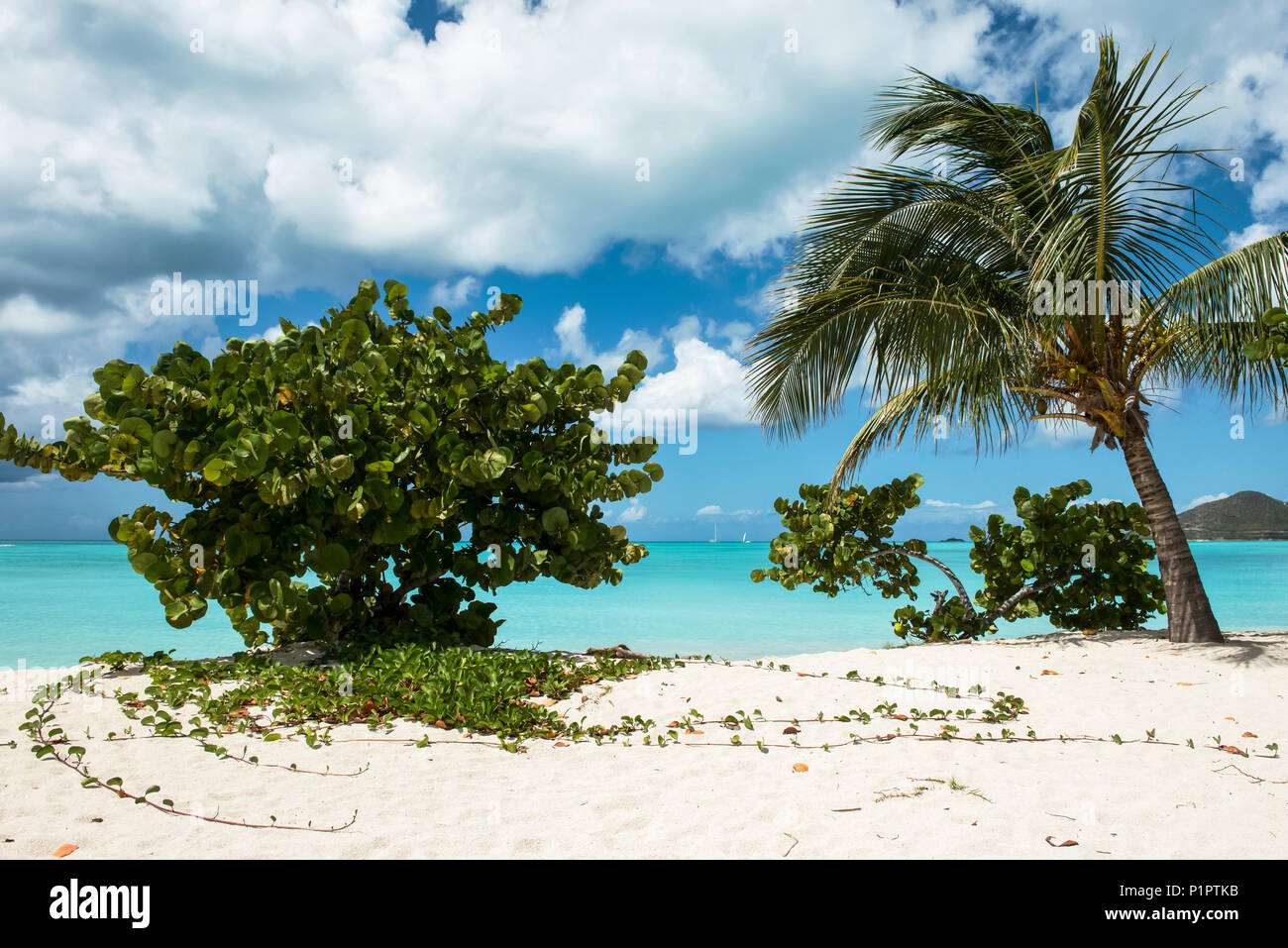 Tropical Jolly Harbour beach along the Caribbean Sea with white sand and trees; Antigua and Barbuda - Stock Image