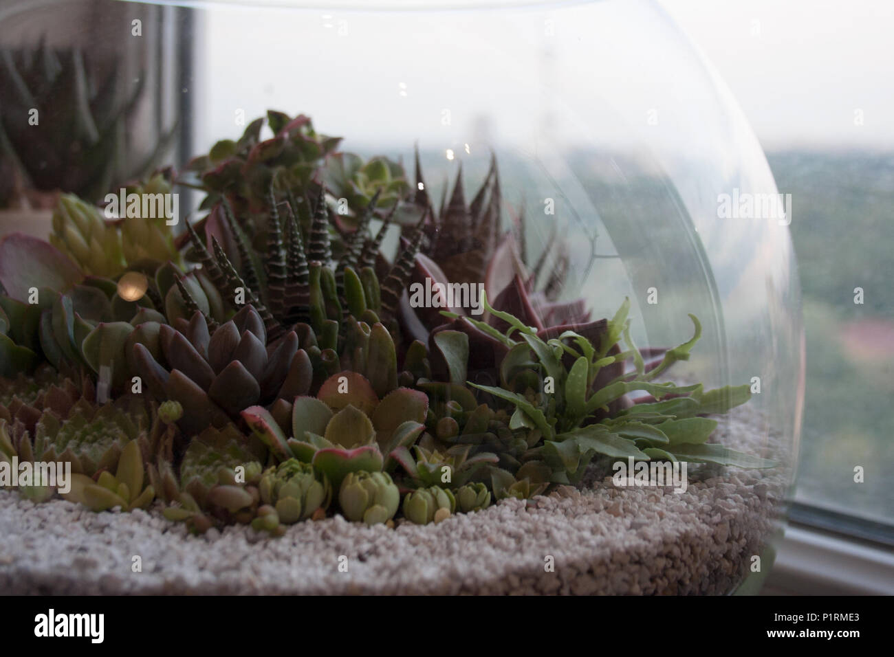 Various Succulent Plants Composition In Round Glass Terrarium Near