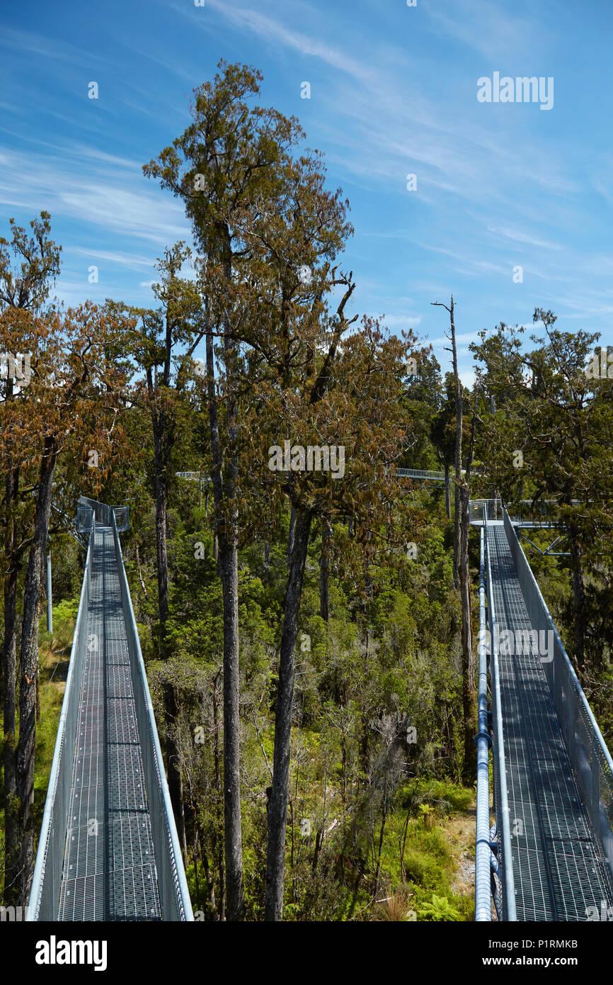 Treetop walk, near Hokitika, West Coast, South Island, New Zealand - Stock Image
