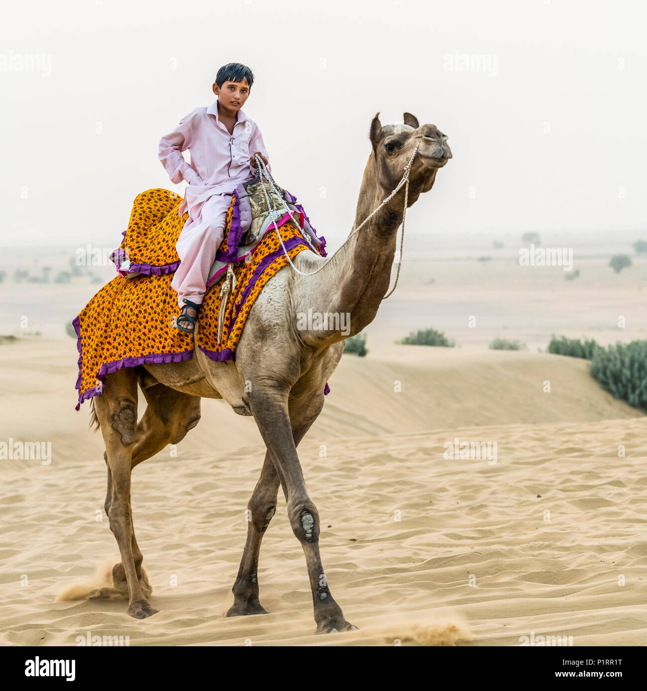 A boy on a camel safari; Damodara, Rajasthan, India - Stock Image