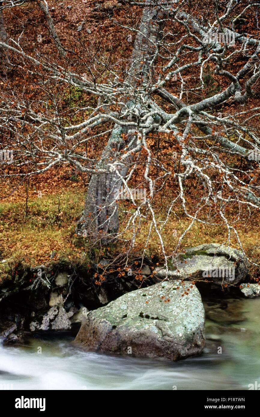 Alta Ribagorça: Noguera Ribagorçana river; near Hospital de Viella (Alta Ribagorça). - Stock Image