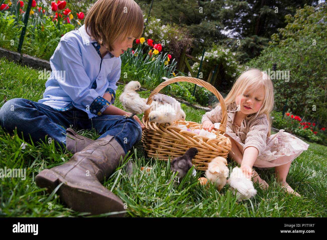 Young brother and sister with basket full of baby chickens in a rural garden setting - Stock Image