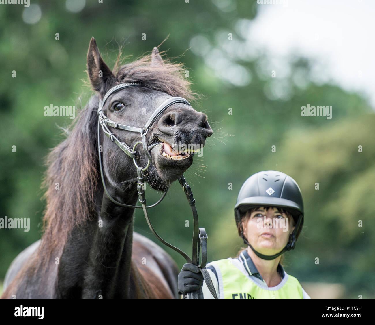 rider holding scared horse - Stock Image