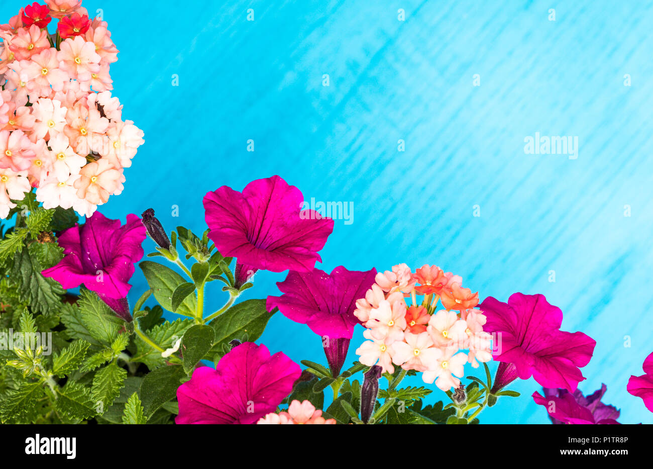 Bright And Cheerful Spring And Summer Flowers On Blue Wooden Board