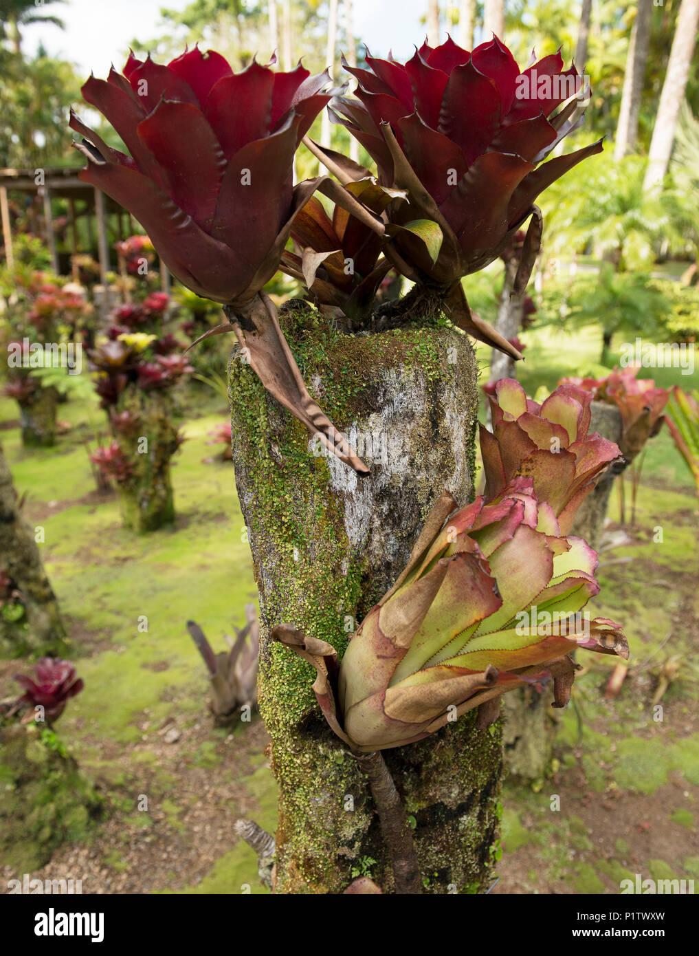 Tropical Caribbean Gardens Stock Photos & Tropical Caribbean Gardens ...