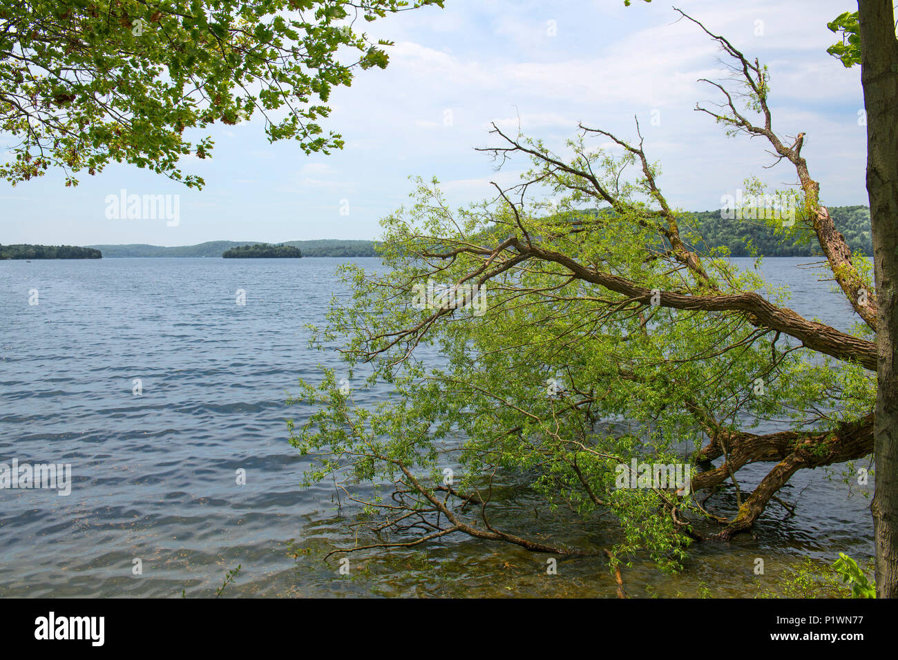 Beyond a fallen tree lies in a beautiful lake with islands and forested shores - Stock Image