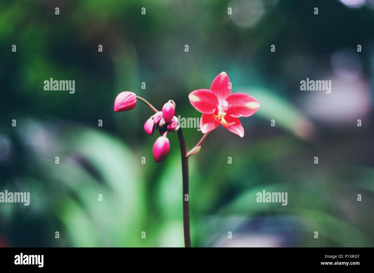 Beautiful Natural Flowers Background Stock Photo: 207728328 - Alamy