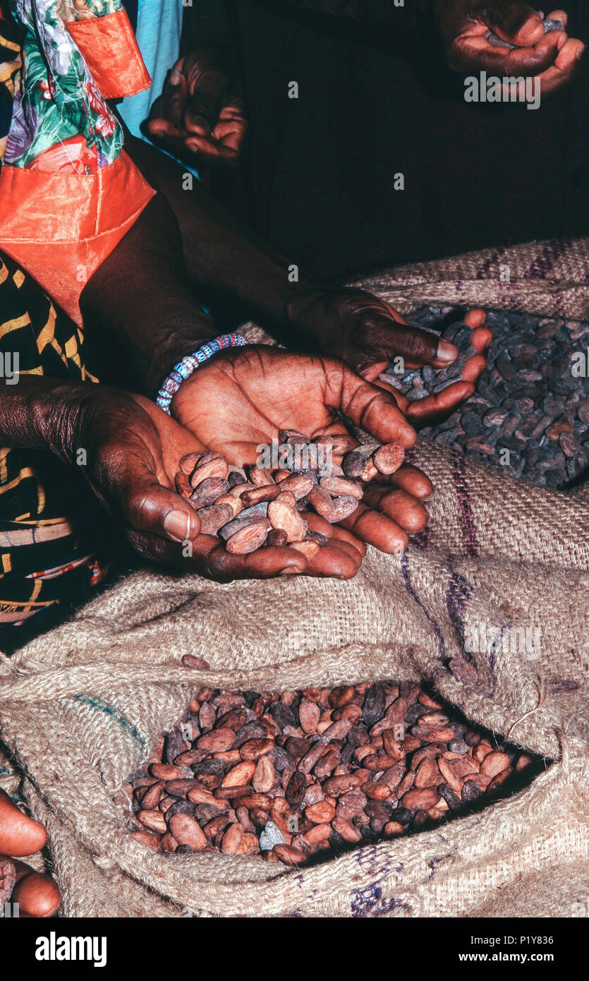 Africa, Togo, dried cocoa beans ready for dispatch - Stock Image