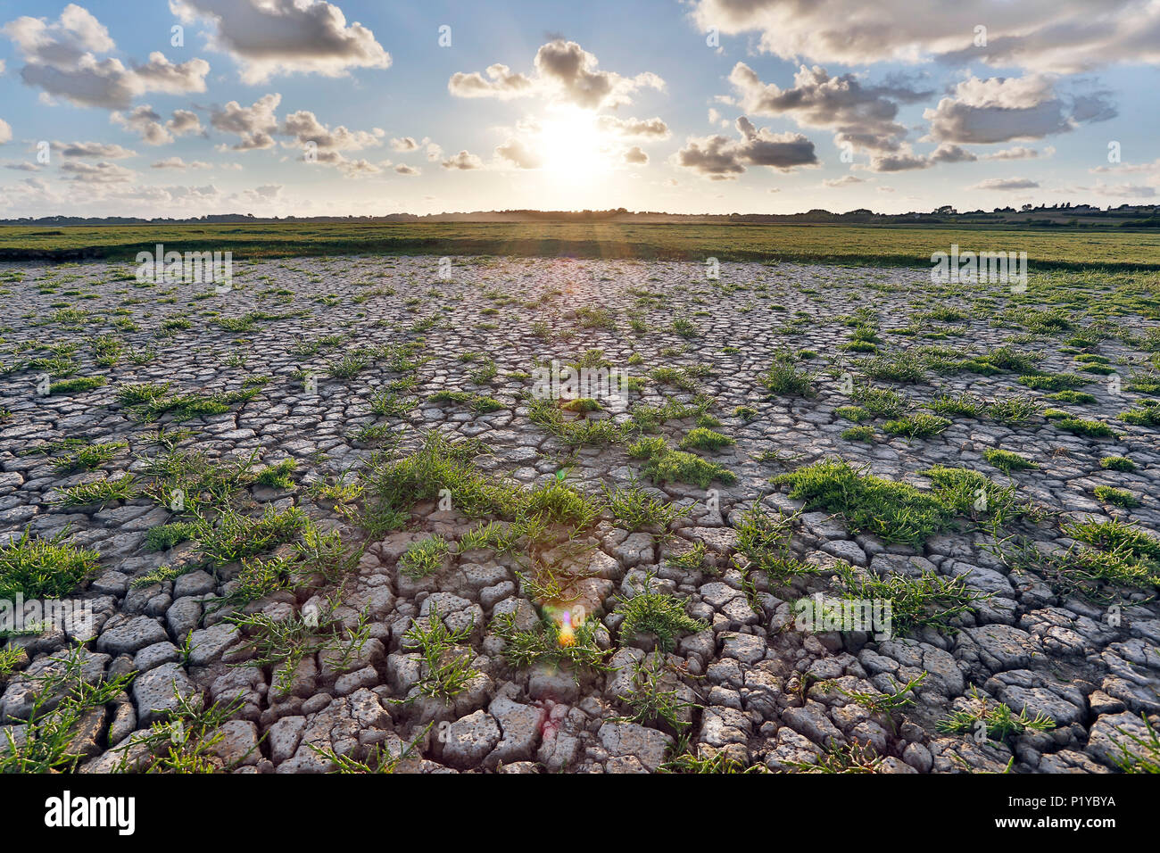 Normandy. Channel. Regneville on Wed Sunset on the marshes drained by the heat wave. Salicornes. - Stock Image