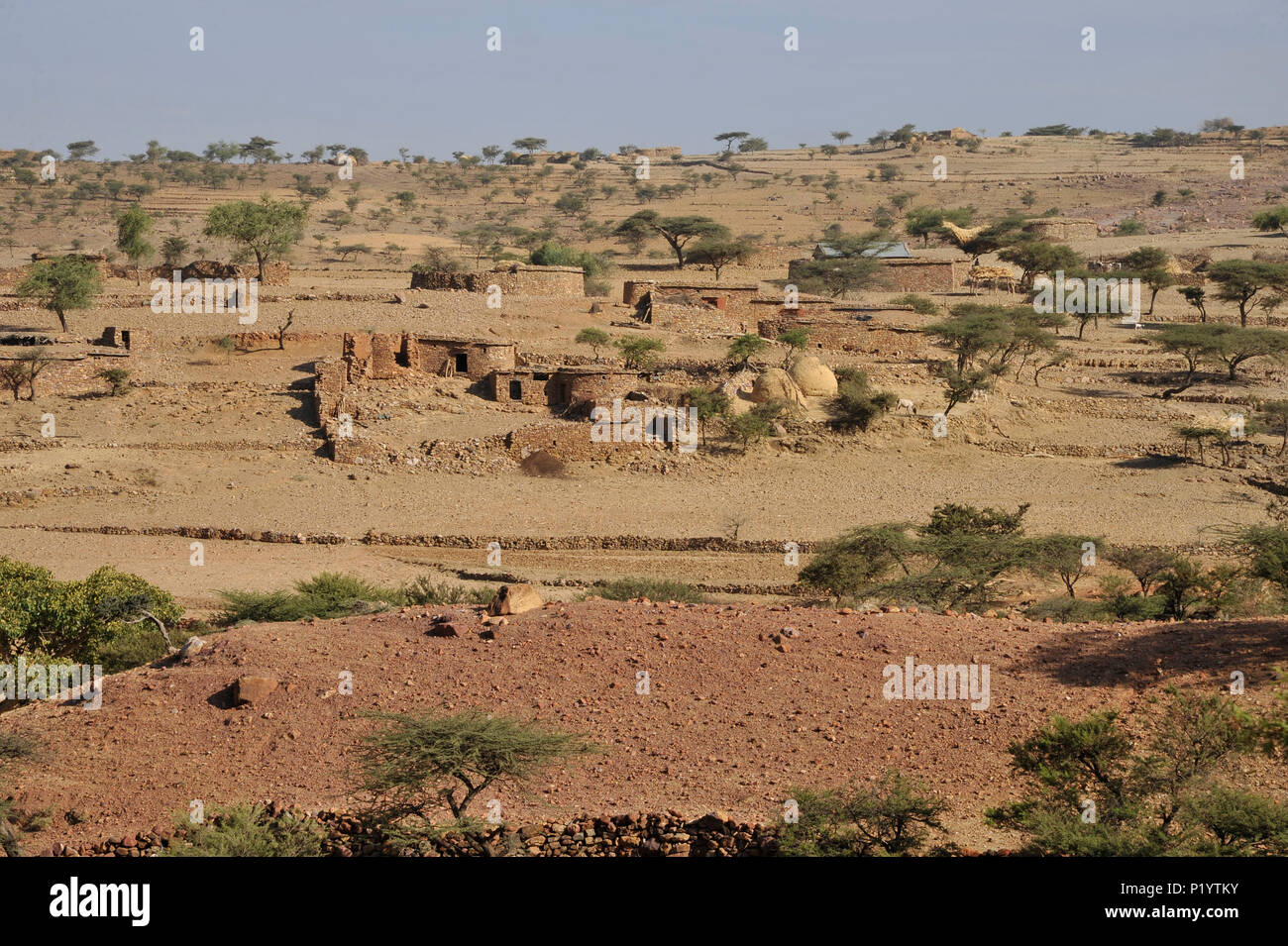 Ethiopia, Tigray area, Gheralta mountains, Hawzen, typical arid landscape from the north of Ethiopia with its low stone houses surrounded by acacia trees - Stock Image