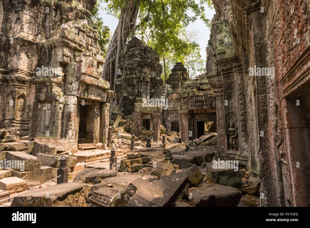 Giant tree and roots in temple Ta Prom Angkor wat - Stock Image