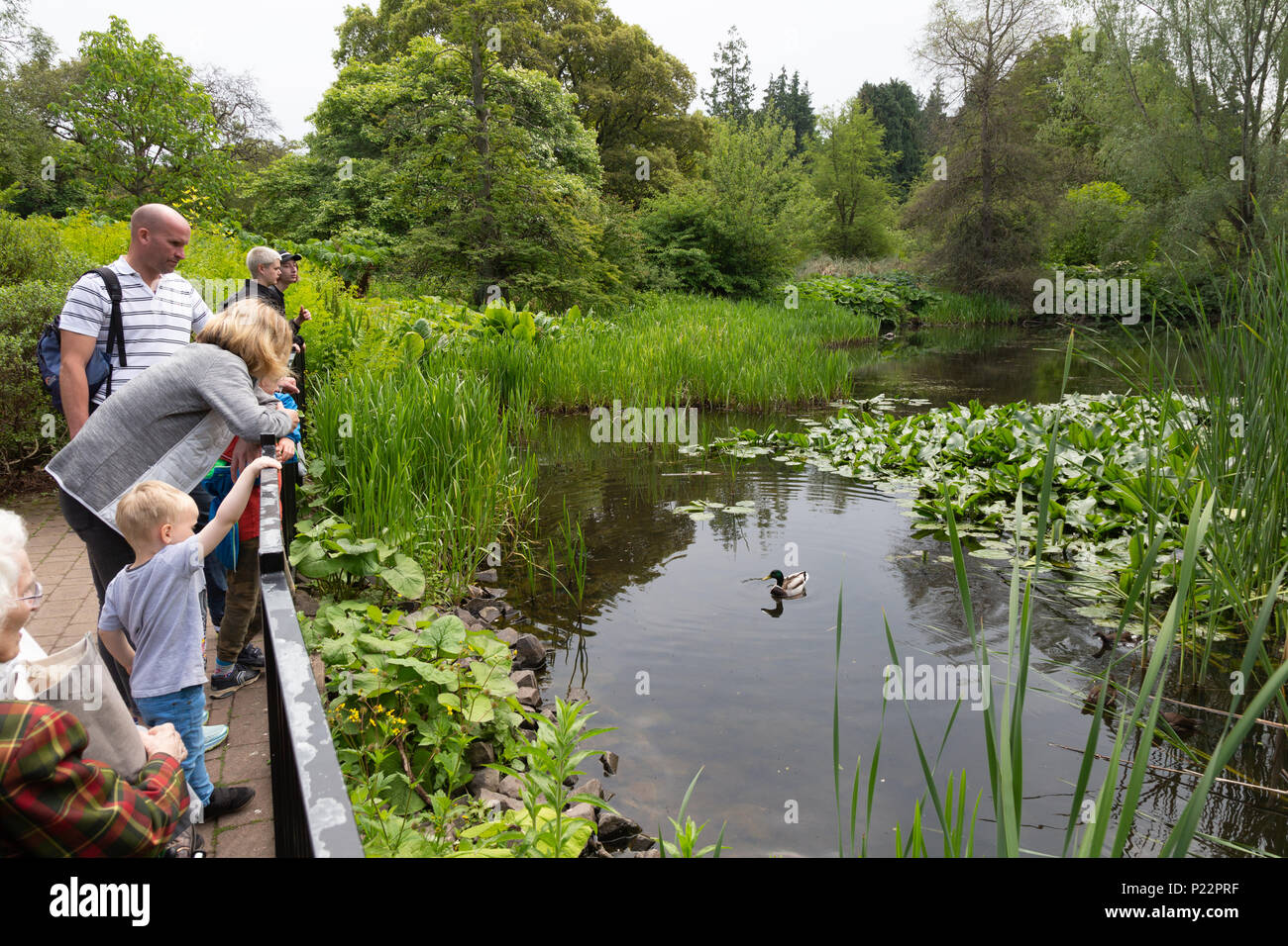Adults and children at the ponds in the Royal Botanic Garden, Edinburgh, Scotland UK - Stock Image