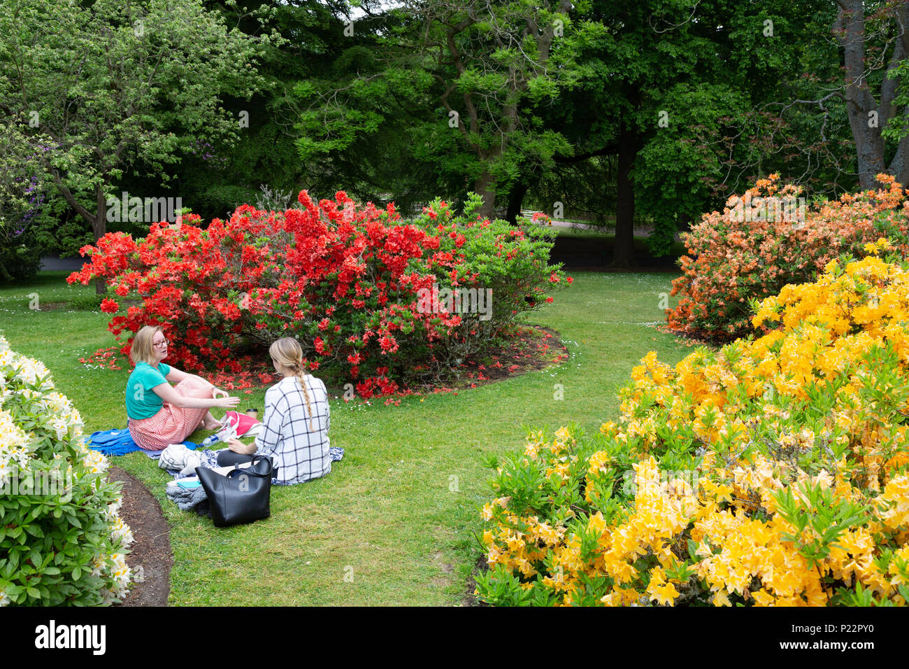 Visitors sitting in the Royal Botanic Garden, Edinburgh, Scotland UK - Stock Image