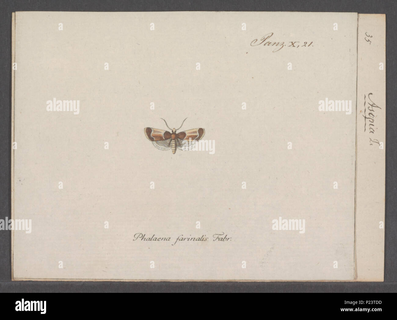 . Asopia  23 Asopia - Print - Iconographia Zoologica - Special Collections University of Amsterdam - UBAINV0274 061 05 0003 Stock Photo